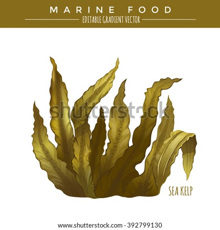 sea kelp marine food