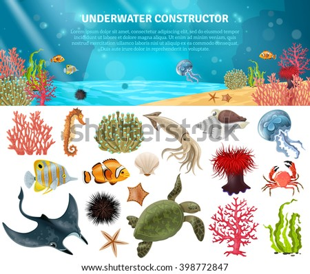 sea life animals plants and