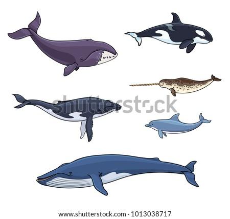 sea mammals  cetacea  ...