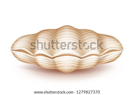 Sea mollusk closed, beige shell 3d realistic vector icon isolated on white background. Original soapbox, decorative case for jewelery of pearls, wedding ring box from natural materials illustration
