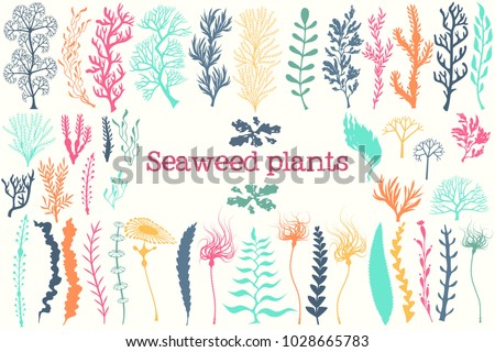 sea plants and aquarium seaweed