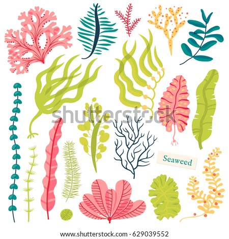 sea plants and aquatic marine