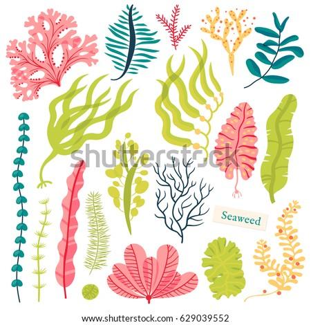 Sea plants and aquatic marine algae. Seaweed set vector illustration isolated on white