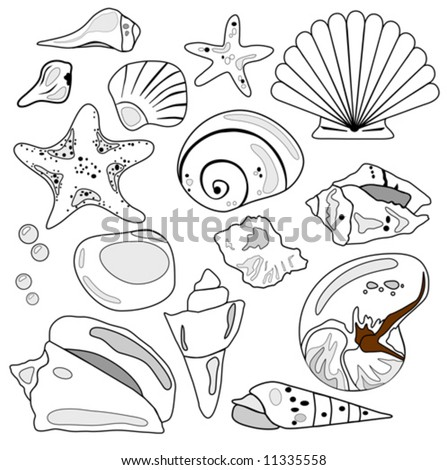 Sea Shell Collection vector is hand drawn original artwork.