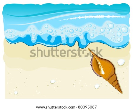 sea shell on the beach with wave and sand