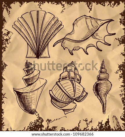 Sea shells collection isolated on vintage background. Hand drawing sketch vector illustration