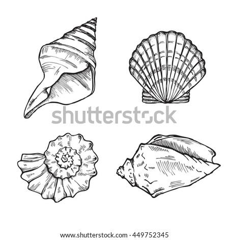 sea shells isolated on white background set, vector illustration