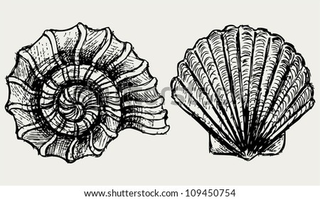 Sea snail and scallop shell - stock vector