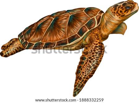 sea turtle color vector