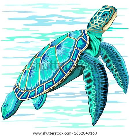 Sea Turtle Turquoise Oceanlife Vector Art   Stock photo ©