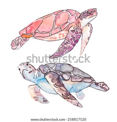 sea turtles ocean vector