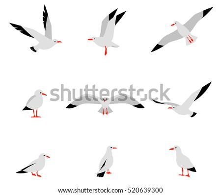 seabirds set of beautiful