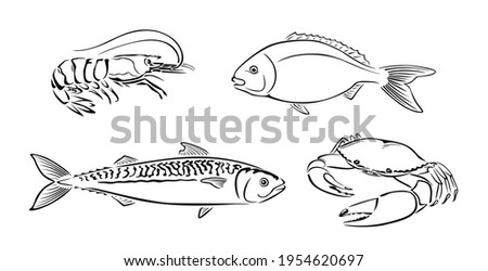 Seafood black and white outline. Vector illustration of dorado, shrimp, crab and mackerel. Set of Fish and crustacean.  Photo stock ©