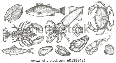 Seafood hand drawn vector illustrations isolated on white background, elements for restaurant menu design, decor, label. Engraving sketchy retro style.