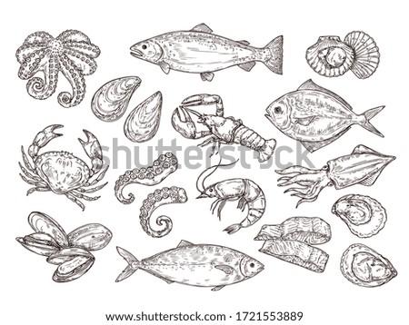 Seafood sketch. Vintage fish, drawing food. Delicious shrimp, shell squid. Sea cuisine, grilled crab calamari. Fresh raw market vector set
