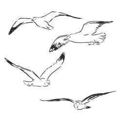 Seagull bird animal sketch engraving vector illustration. Scratch board style imitation. Hand drawn image. Seagull bird, vector sketch illustration