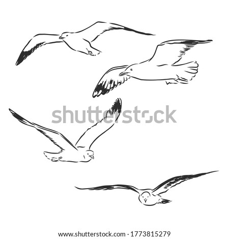 Seagull bird animal sketch engraving vector illustration. Scratch board style imitation. Hand drawn image. Seagull bird, vector sketch illustration stock photo