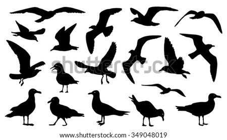 seagull silhouettes on the