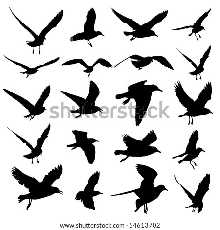 Seagull Vector mix
