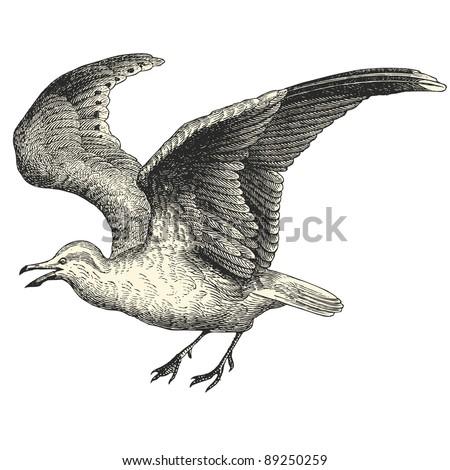 seagull   vintage engraved...
