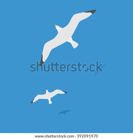 seagulls flying on water  the