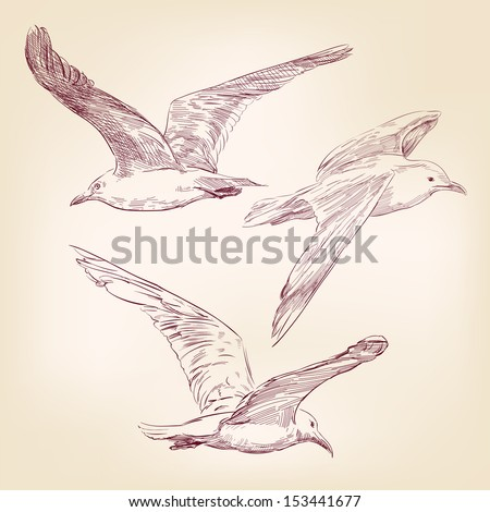 seagulls set  hand drawn vector ...