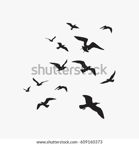 seagulls silhouette
