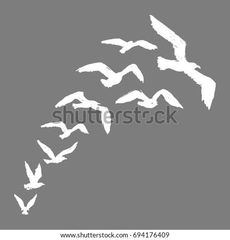 Seagulls - Silhouette of White Flying Birds