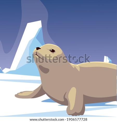 seal animal resting iceberg