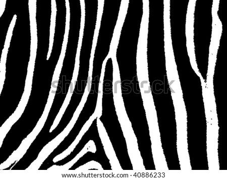 seamless animal pattern skin fur vector zebra - XXL version in jpeg available in my portfolio