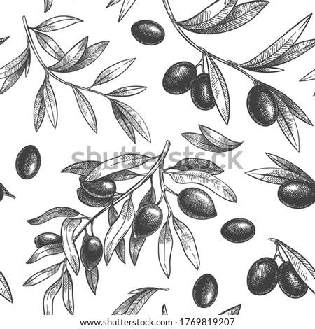 Seamless black olive pattern. Greek olives on branches with leaves, hand drawn sketch vector illustration. Greek olive twig, floral decoration fresh