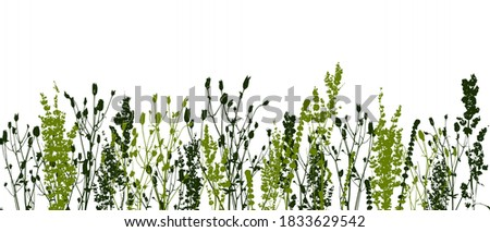 Seamless border with silhouettes of wild herbs on a white background - blade of grass for natural design Foto d'archivio ©