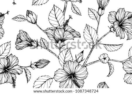 Hibiscus Flowers - Kostenlose Vektor-Kunst, Archiv-Grafiken & Bilder ...