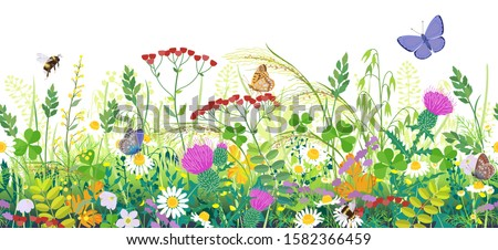 Seamless horizontal border with summer meadow plants and insects. Green grass, colorful wild flowers, bumblebees and butterflies on white background. Floral natural pattern vector flat illustration. stock photo