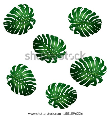 Seamless pattern of beautiful big green leaves Monstera plant, Monstera on white background, vector illustration