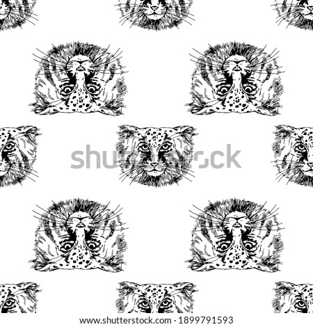Seamless pattern of hand drawn sketch style Pallas's cats isolated on white background. Vector illustration. Foto d'archivio ©