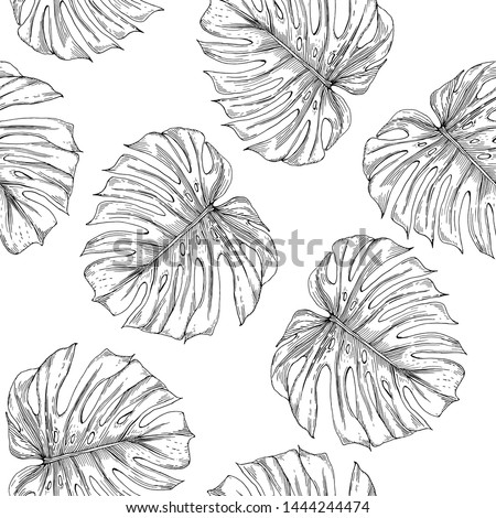 Seamless pattern of monstera leaves. Monstera leaves are drawn in the form of a sketch on a white background.