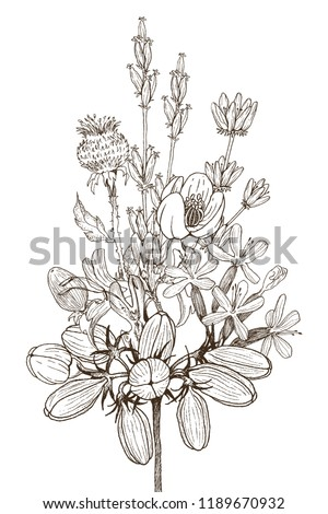 Seamless pattern of wild herbal flowers. Vector. Hand drawn artwork. Flower concept for wedding invitations, cards, tickets, congratulations, branding, boutique logo, label. Botanical style sketch #1189670932