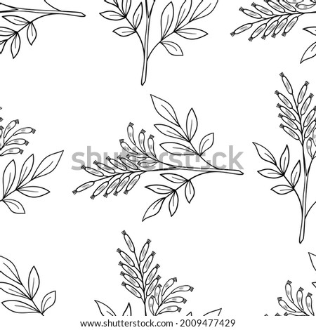 Seamless pattern with bitter herbs Quassia amara in sketch style. Bitter-wood, or amargo, bitter-ash, hombre grande, elements and flowers, leaves and berries. Hand drawn doodle illustration. Foto stock ©