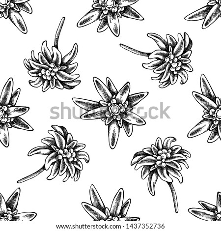 Seamless pattern with black and white edelweiss #1437352736