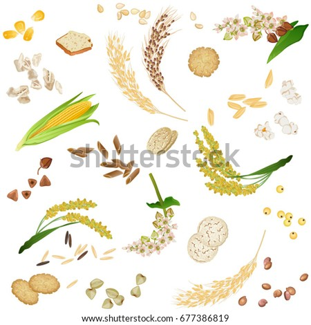 Seamless pattern with gluten free cereal foodstuff / There are ears, grains, waffles, flakes and bread from corn, millet, rice, buckwheat, sesame and quinoa