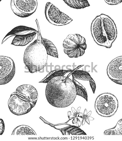 Seamless pattern with lemons, oranges and mandarins. Hand drawn illustration. Vector