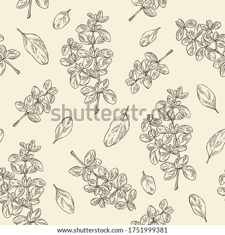 Seamless pattern with marjoram. Vector hand drawn illustration. Stock photo ©