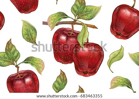 Seamless pattern with red apples. Realistic vector illustration plant. Hand drawing with colored pencils. Fruit, leaf, branch of tree on white background. For kitchen design, food packaging. Vintage.