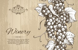 Seamless vector border hand drawn bunch of grapes vine illustration on wood barrel texture background. Elegant template design in vintage style