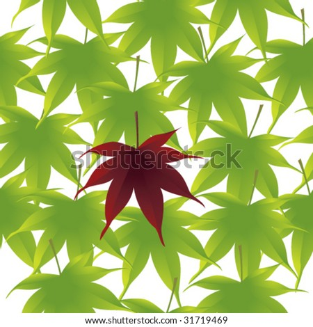 red japanese maple leaves. Bright green Japanese maple