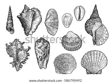 seashell collection  engraving