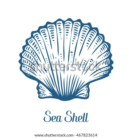 Seashell, sea shell, nature ocean aquatic underwater vector. Hand drawn Seashell marine engraving illustration on white background