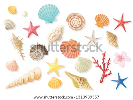 Seashell summer illustration set