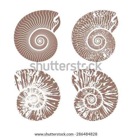 seashells nautilus vintage